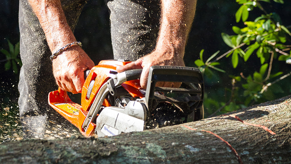 Chainsaw cutting through a tree at Above and Beyond Tree Services Inc.