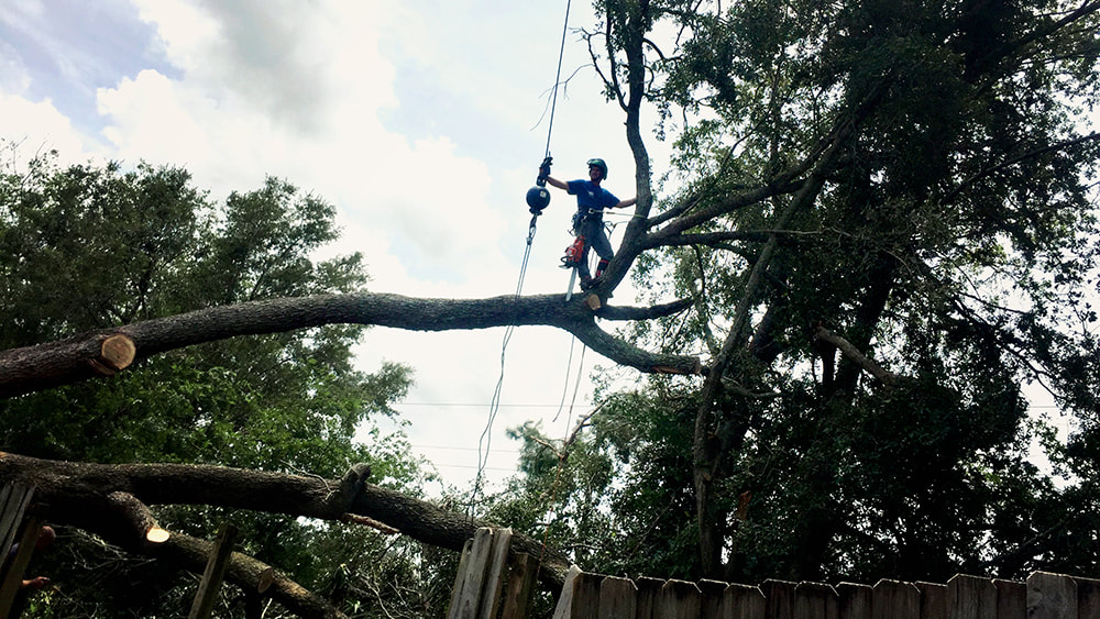 Groundsman on a downed tree at Above and Beyond Tree Services Inc.