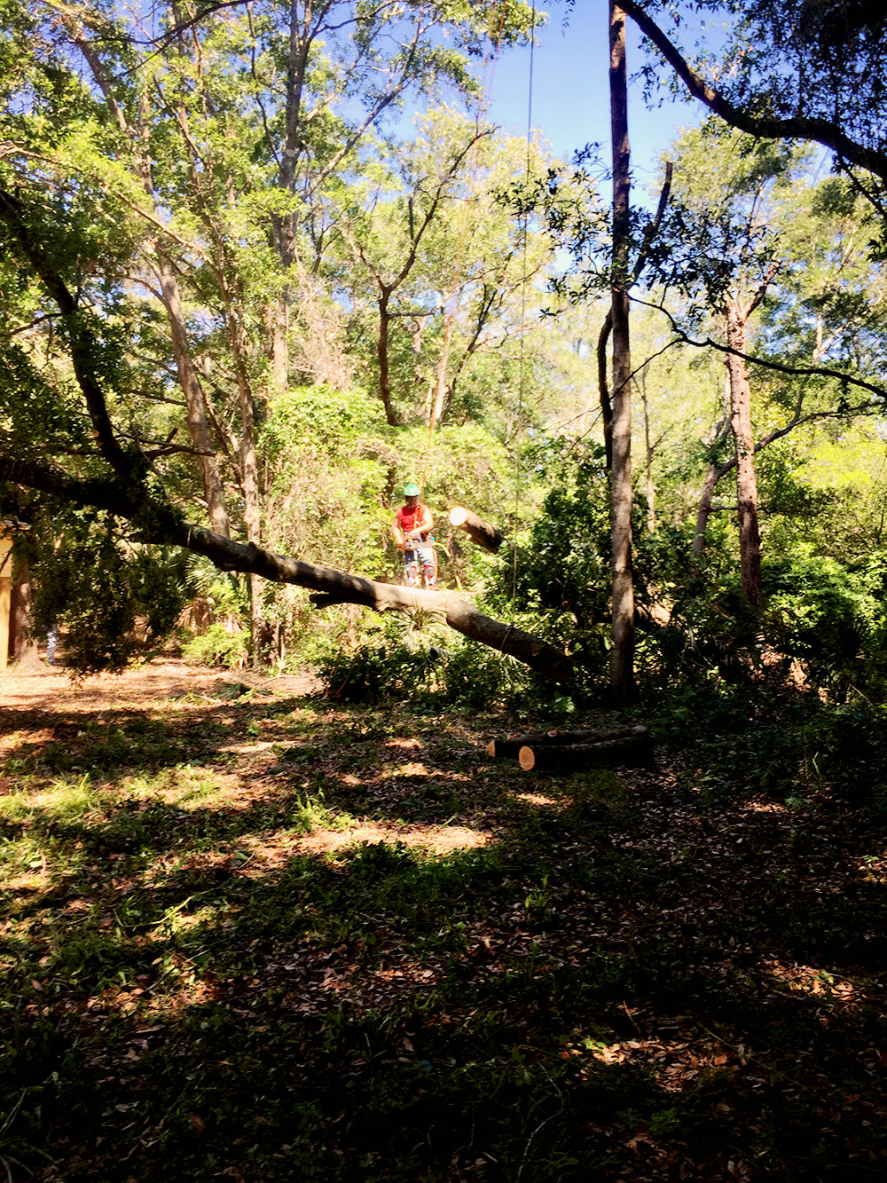Above and Beyond Tree Services Inc cutting trees during a land clearing job